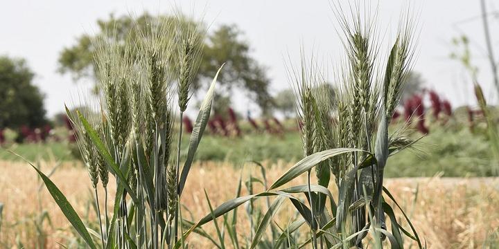 Ухвалено нові урядові програми підтримки фермерських господарств та розроблено Порядки їх виконання.