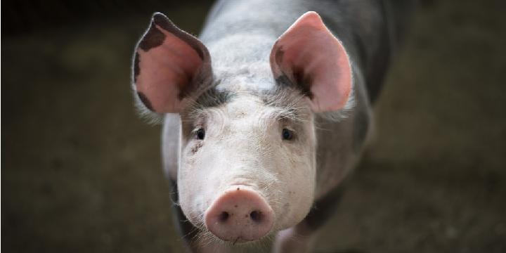 Заборони на продаж «домашнього м'яса» – немає